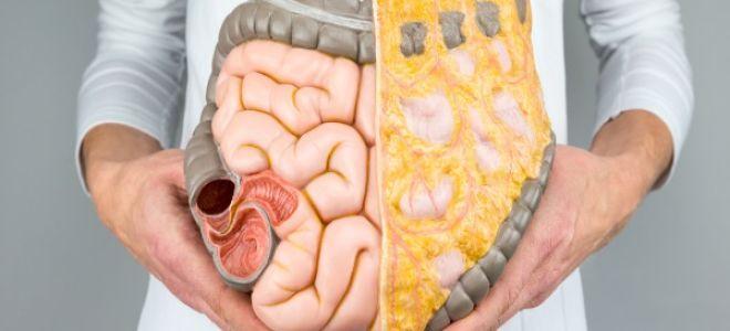 Food For Gut Health: ਅੰਤੜੀਆਂ ਨੂੰ ਤੰਦਰੁਸਤ ਰੱਖਣਾ ਹੈ ਤਾਂ ਅੱਜ ਤੋਂ ਹੀ ਖਾਓ ਇਹ ਚੀਜ਼ਾਂ